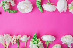花卉框架由白色毛茛属、snapdragon、郁金香和小苍兰花制成在桃红色背景 平的位置,顶视图 fl的样式 库存图片