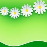 花卉框架,与3d春黄菊的背景 免版税库存照片