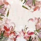 花卉框架,百合 免版税图库摄影