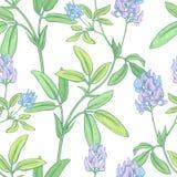 花卉模式无缝的向量墙纸 免版税库存照片