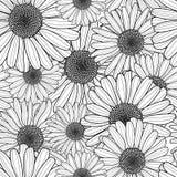 花卉模式无缝的向量 与概述手拉的春黄菊花的黑白背景 库存图片