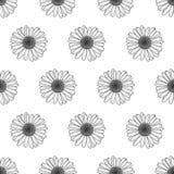 花卉模式无缝的向量 与概述手拉的春黄菊花的黑白背景 免版税库存图片