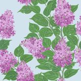 花卉模式无缝的向量 皇族释放例证