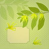 花卉模板 免版税库存图片