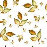 花卉水彩无缝的样式 美好的传染媒介手拉的纹理 网页的浪漫背景,婚姻 库存例证