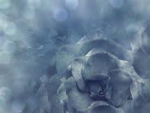 花卉浅兰的背景从上升了 开花构成 一朵蓝色玫瑰的花在一透明蓝色背景bokeh的 克洛 库存照片