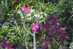 花卉照片背景 热带叶子植物在异乎寻常的庭院里 免版税库存图片