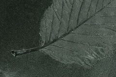 花卉版本记录 免版税库存照片