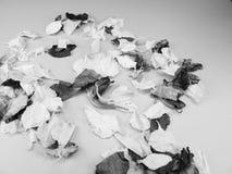 花卉瓣五彩纸屑豪华虹膜 免版税库存照片