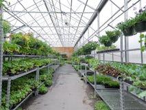 花卉生长在园艺中心箔温室里  库存图片