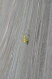 花卉生长在墙壁 免版税图库摄影