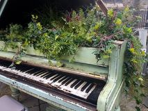 花卉生长在小型三角钢琴外面 库存照片