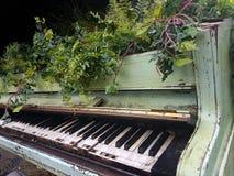 花卉生长在小型三角钢琴外面 免版税库存图片