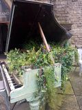 花卉生长在小型三角钢琴外面 免版税库存照片