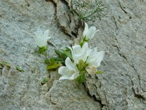 花卉生长在岩石 免版税库存图片