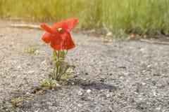 花卉生长在柏油路 库存图片