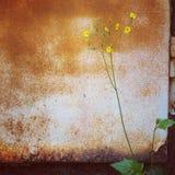 花卉生长在角落 库存照片