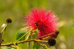 花卉生长在La Gran Sabana,委内瑞拉 免版税库存照片