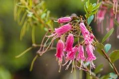 花卉生长在La Gran Sabana,委内瑞拉 免版税图库摄影