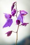 花卉生长在La Gran Sabana,委内瑞拉 库存图片