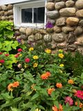 花卉生长对散石墙壁 库存图片