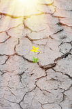 花卉生长 免版税库存照片