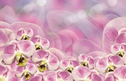 花卉白桃红色背景 花束构成例证兰花夏天向量 开花在一桃红色白的背景bokeh的兰花植物 2007个看板卡招呼的新年好 免版税库存图片