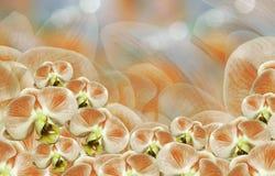 花卉白橙色背景 花束构成例证兰花夏天向量 开花在一橙色白的背景bokeh的兰花植物 2007个看板卡招呼的新年好 免版税库存照片