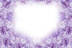 花卉白紫罗兰色美好的背景 背景构成旋花植物空白花的郁金香 白蓝色花康乃馨白色背景框架  库存照片