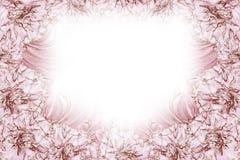 花卉白红色美好的背景 背景构成旋花植物空白花的郁金香 白红色花康乃馨白色背景框架  库存图片