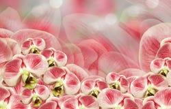 花卉白红色背景 花束构成例证兰花夏天向量 开花在一红白的背景bokeh的兰花植物 2007个看板卡招呼的新年好 免版税库存照片