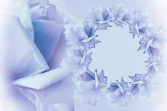花卉白蓝色桃红色美好的背景 背景构成旋花植物空白花的郁金香 青桃红色花玫瑰框架在浅兰的背景的 免版税库存照片