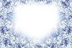 花卉白蓝色绿松石美好的背景 背景构成旋花植物空白花的郁金香 白蓝色花康乃馨白色背景框架  免版税库存照片