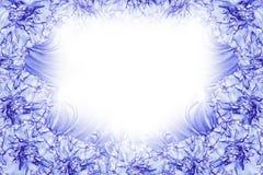 花卉白蓝色美好的背景 背景构成旋花植物空白花的郁金香 白蓝色花康乃馨白色背景框架  免版税库存图片