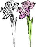 花卉看板卡 免版税库存图片