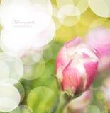 花卉看板卡 图库摄影