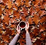 花卉秋天背景 一个杯子咖啡在妇女` s手上在橡木背景下落的橙色叶子的一件毛线衣  库存照片