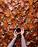 花卉秋天背景 一个杯子咖啡在妇女` s手上在橡木背景下落的橙色叶子  你好 免版税库存照片