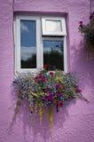 花卉窗槛花箱 库存照片
