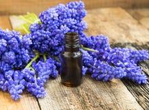 花卉精华瓶 与根本紫色flo的有机skincare 免版税库存图片
