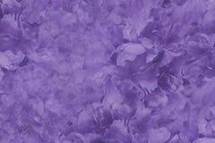 花卉紫罗兰色美好的背景 花紫罗兰牡丹墙纸  背景构成旋花植物空白花的郁金香 特写镜头 库存图片