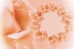 花卉红白的美好的背景 背景构成旋花植物空白花的郁金香 红色框架开花在浅红色的背景的玫瑰 罗斯关闭 库存照片