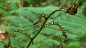 花卉细节在热带密林 在雨林厂新芽的浅焦点关闭  股票录像