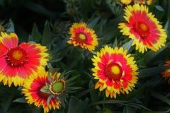 花卉群 免版税库存照片