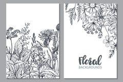花卉背景用手拉的草本和野花 库存图片