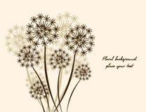 花卉背景蒲公英 库存照片