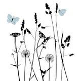 花卉背景蒲公英 免版税库存照片