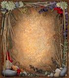 花卉背景边界 免版税库存图片