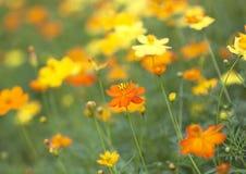 花卉背景迷离 库存图片