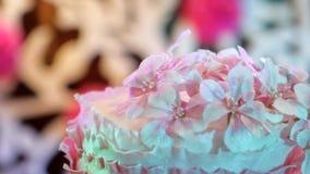 花卉背景,葡萄酒背景,美丽的桃红色花,在花束的花 股票视频